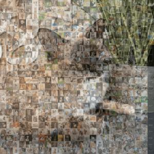 Cat photo collage